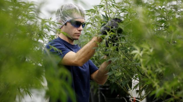 Wall Street's Marijuana Madness: 'It's Like the Internet in 1997'
